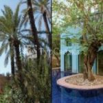 Es Saadi Gardens & Resort Marrakech 5*
